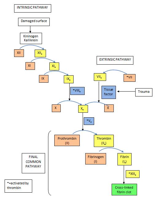 Leiden mutation